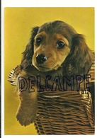 Chien. Dog. Jeune Teckel Dans Un Panier. European Greetings. 1998 - Chiens