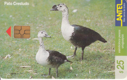 URUGUAY - Bird, Pato Crestudo(114a), 03/00, Used - Uruguay