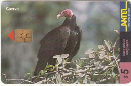 URUGUAY - Bird, Cuervo(113a), 03/00, Used - Uruguay