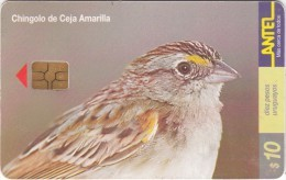 URUGUAY - Bird, Chingolo De Ceja Amarilla(130a), 08/00, Used - Uruguay