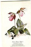 USA Postcard 1950 With Orcjid-Lady Slipper.BARGAIN.!! - Fleurs, Plantes & Arbres
