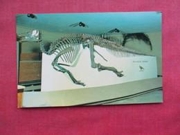 Edomontosarurus Skelton ------ Dinosaurs   -- Ref 3288 - Animaux & Faune