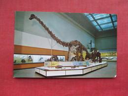 Diplodocus ------ Dinosaurs   -- Ref 3288 - Animaux & Faune