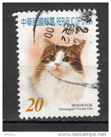 Taiwan, Chine, China, Chat, Cat, Norvegian Forest Cat - Chats Domestiques