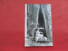Classic  Lasalle  The Shrine Tree  California License Plate  RPPC   >   Ref 3289 - Passenger Cars