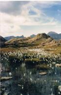 Photo  Originale De Particulier - Lac Morgon -Mercantour  06 - -Format 15 X 10 Couleurs - Scans Recto Verso - Lieux