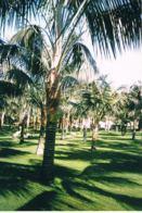 Photo  Originale De Particulier - Jardin Zeneriffe -Espagne  -Format 15 X 10 Couleurs - Scans Recto Verso - Lieux