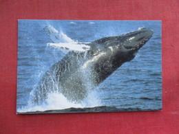 Humpback Whale   Ref 3290 - Animals