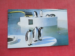 Penguins Portland Zoo     Ref 3290 - Animals