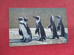 Penguins     Ref 3290 - Animals