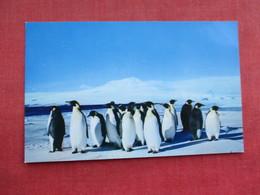 Emperor Penguins     Ref 3290 - Animals