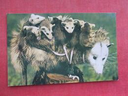Baby Opossums    Ref 3290 - Animals