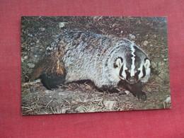 Badder    Ref 3290 - Animals