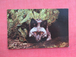 Silver Fox    Ref 3290 - Animals