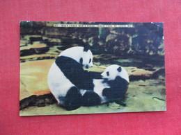 When Panda Met Panda St Louis Zoo     Ref 3290 - Bears