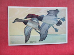 Canvasback  Male & Female       Ref 3290 - Birds