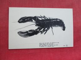 Lobster    Ref 3290 - Fish & Shellfish
