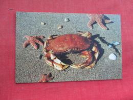 Pacific Ocean Crab   Ref 3290 - Fish & Shellfish