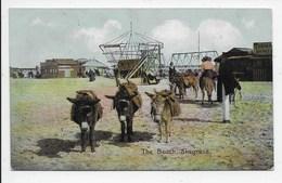 Donkeys - The Beach Skegness - Shurey - Donkeys
