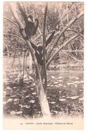 Saigon (Viêt-Nam)  Le Jardin Botanique - Gibbons En Liberté - Viêt-Nam