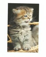 Carte Fantaisie CHAT CHATS ** CAT CATS ** KAT KATTEN KATZE - Cats