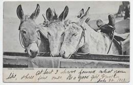 Donkeys - The Costers' Friends - Tuck 223 - Donkeys