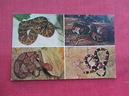 Snake -- Multi View Poisonous Snakes      Ref 3291 - Fish & Shellfish