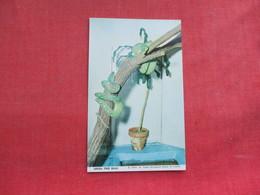 Snake -- Green Tree Boas      Ref 3291 - Fish & Shellfish