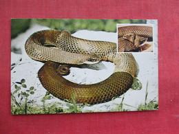 Snake --How A Snake Sheds Skin     Ref 3291 - Fish & Shellfish