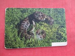 Snake --Don't Tread On Me Rattlesnake     Ref 3291 - Fish & Shellfish
