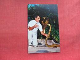 Snake --William Haast  Produce An Amber Liquid From Snake Florida   Ref 3291 - Fish & Shellfish