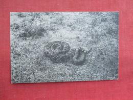 Snake --Deadly Diamondback Rattles   Texas Mexican Border   Ref 3291 - Fish & Shellfish
