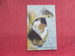 Snake - Snake Pit Wild Animal Exhibit Calif.    Ref 3291 - Fish & Shellfish