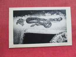 Snake------ South American Boa & Babies     Ref 3291 - Fish & Shellfish
