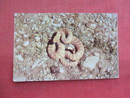 Snake------ Prairie Rattler      Ref 3291 - Fish & Shellfish