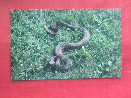 Snake------Rattlesnake Found In Some Mountainous Area Of Pa.      Ref 3291 - Fish & Shellfish