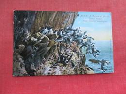 A Niagara Of Murres Carroll Island Washington    Ref 3291 - Birds