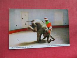 Elephant In Training St Louis Zoo     Ref 3291 - Elephants