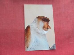 Proboscis Monkey Borneo     Ref 3291 - Monkeys