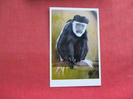 Colobus  Monkey Africa    Ref 3291 - Monkeys