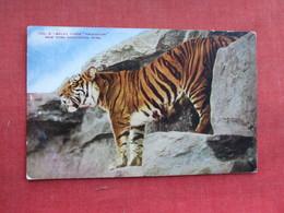 Malay Tiger Princeton NY Zoo     Ref 3291 - Tigers