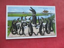 Alligator Chorus Down In Louisiana New Orleans     Ref 3291 - Animals