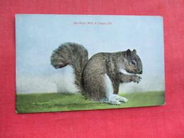 Ann Arbor Michigan Campus Pet         Ref 3291 - Animals