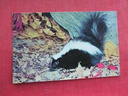 Striped Skunk      Ref 3291 - Animals