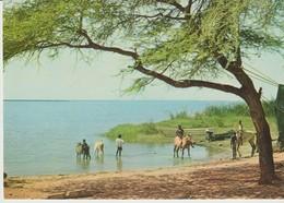 C.P. - PHOTO - IMAGES DU SÉNÉGAL - SUR LA RIVE DU SÉNÉGAL -PC 37 - RENAUDEAU - Sénégal