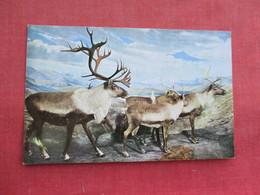 Caribou This Scene Is Rainy Pass Alaska    Ref 3291 - Animals