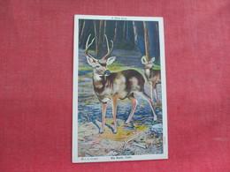 A Wild Buck  Big Basin Calif.   Ref 3291 - Animals
