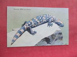 Gila Monster   Ref 3291 - Animals