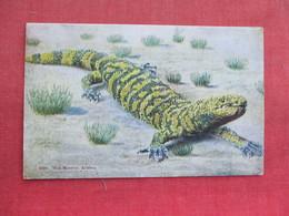 Gila Monster Arizona  Ref 3291 - Animals