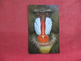Monkey  Mature Male Mandrill Ref 3291 - Monkeys
